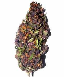 Purple Haze cannabis strain